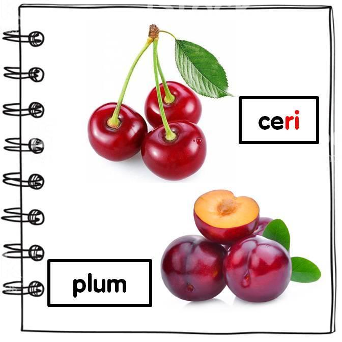 ikad-bergambar-buah-buahan-tembikai Kamus Bergambar Buah-Buahan Untuk Pendidikan Khas