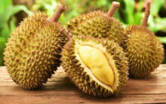 hukum jual beli buah durian
