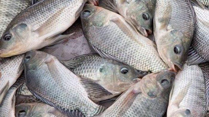 resepi-ikan-siakap-3-rasa-simple-2 Resepi Ikan Siakap 3 Rasa Simple Jer. Gerenti Sedap Guna Cili Kering