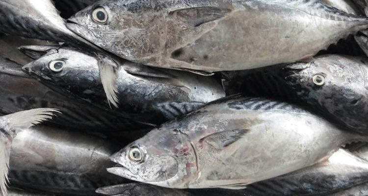 resepi-ikan-tongkol-masak-kicap-13 Resepi Ikan Tongkol Masak Kicap Sedap Hingga Menjilat Jari Tau. Moh Cuba??