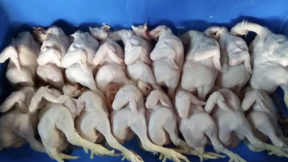 resepi-perapan-kambing@ayam@daging-1-2 Resepi Perapan Kambing@Ayam@Daging. Gerenti Berbaloi Buat Stok Dalam Peti Ais