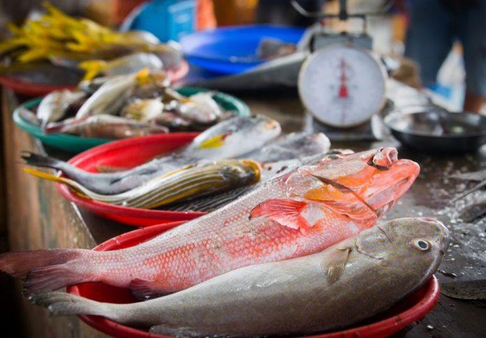 tips memilih ikan segar di pasar 15